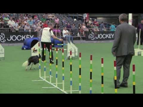 Winning team large dogs, FCI Dog Agility World Championship 2013, South Africa: Switzerland