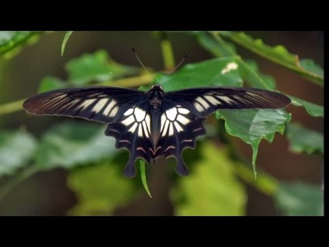 Endangered Butterfly Species We Should Protect. Biology Facts | DISCOVER