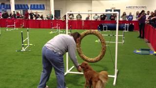 Pet Expo Agility Demo