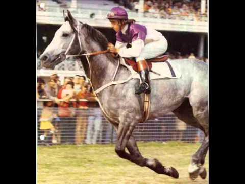 The Goondiwindi Grey Tex Morton Doovi