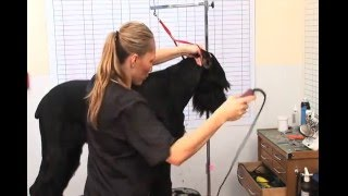 How To Groom A Giant Schnauzer - Trailer