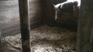 Foaling (1 of 5)  It's time!