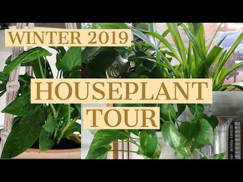 WINTER 2019 HOUSEPLANT TOUR