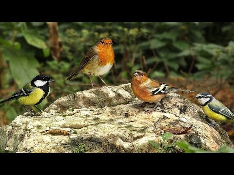 Entertainment for Cats – Birds Return To White Rock