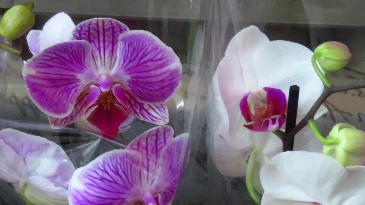 Новый завоз орхидей от 2.07.2020г.И снова Психопсис!!!!!