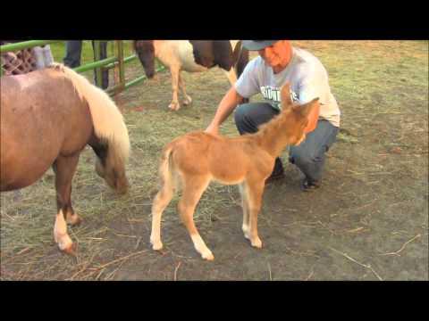 Baby Mule so Adorable!!