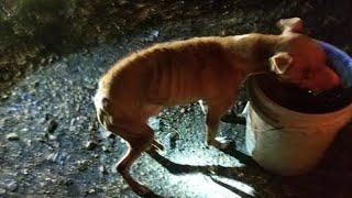 animal rights japan