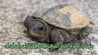 Repeat youtube video เพลงเด็ก เพลง เต่า Turtle Song  BY NDU TV เอ็นดูทีวี