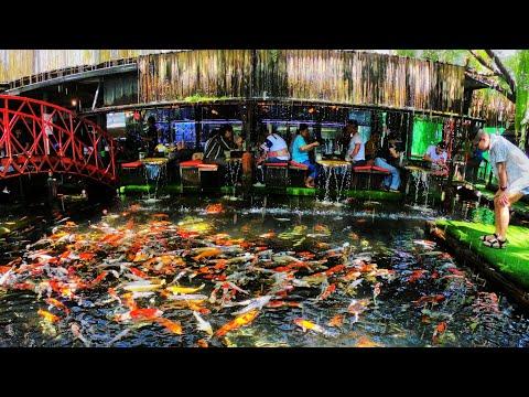 กาแฟปลาคราฟ 8,998 ตัว และสวนมอสสวยๆ