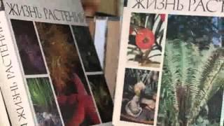 Экскурсия:  Октябрьская библиотека
