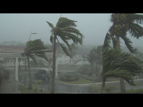 Thrashing Palm Trees, Strong Winds And Torrential Rain - Typhoon Dolphin 4K Stock Footage Screener