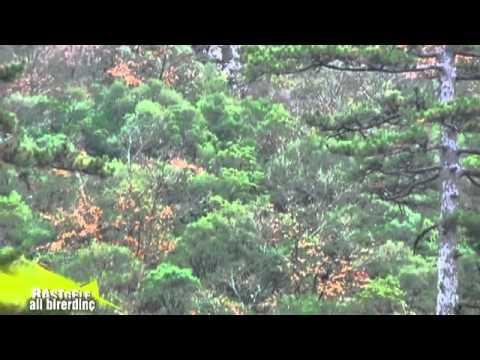 Rastgele Çanakkale Biga Domuz Avı 1.3