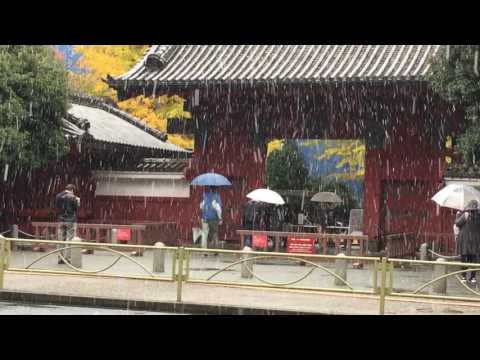 Snowfall in Tokyo (videos nearby the University of Tokyo) in 24 November 2016!