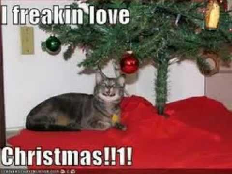 funny christmas animals - YouTube