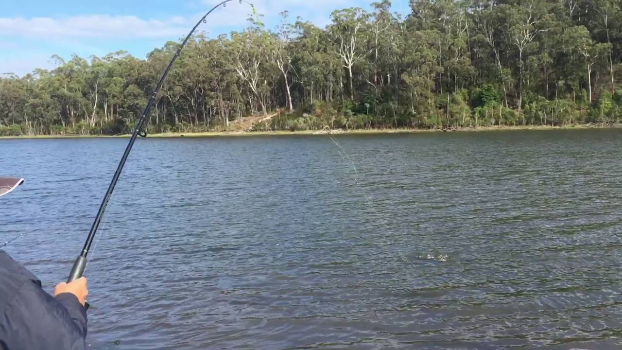 Lake Tyers Landbased, 98cm flathead, Fishing Victoria