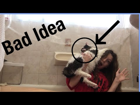 Attempting to give my cat a bath (BAD IDEA)