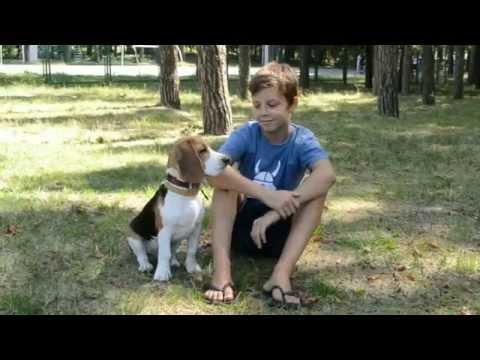 Куда пойти с собакой в Киеве? Парк им. Пушкина. (Часть 1.1 Парки)