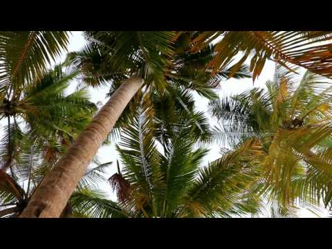 Maldives Thoddoo & Dhiffushi - Tips for holiday