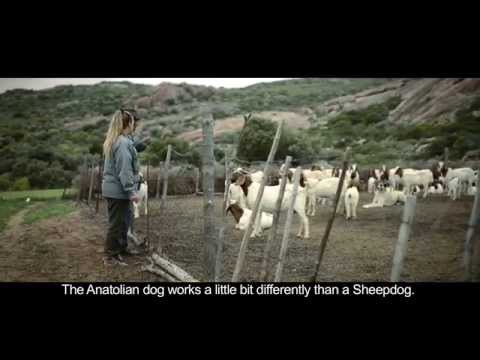SKEPPIES: Small Grants Encourage Alternative Livelihoods | Conservation South Africa (CSA)