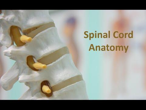 Spinal Cord - Part 4 Of 6: Dorsal Column Medial Lemniscus