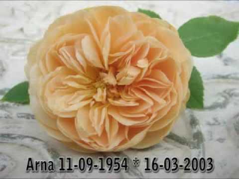 Adamo - Amour Perdu.flv