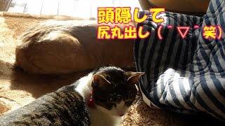 毎朝恒例の♂猫だいずのお見送り。今朝はちょっとした事故が・・・   お...
