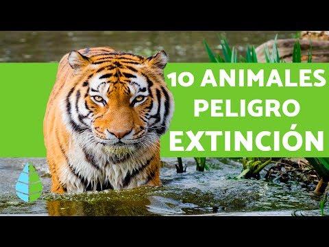 10 ANIMALES EN