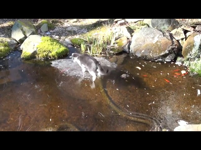 Cat Wants Fish Under Ice – 951769