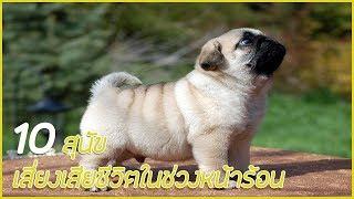 10 อันดับ สุนัขที่มีความเสี่ยงได้ในหน้าร้อน !?!