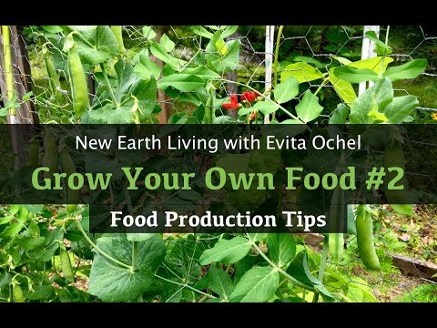 Grow Your Own Food 2 — Gardening Tips (NEL ep. 14)