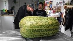 Giant Watermelon 288 lbs. cut open (see inside )