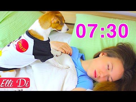 МОЁ УТРО И УТРО МОЕЙ СОБАКИ / MY MORNING ROUTINE with dog | Elli Di Pets