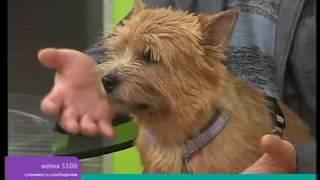 Перелом лап у собак