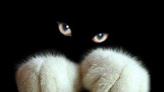 Приколы.Приколы+про кошек. Бойцовый кот,-вот зверюга!...
