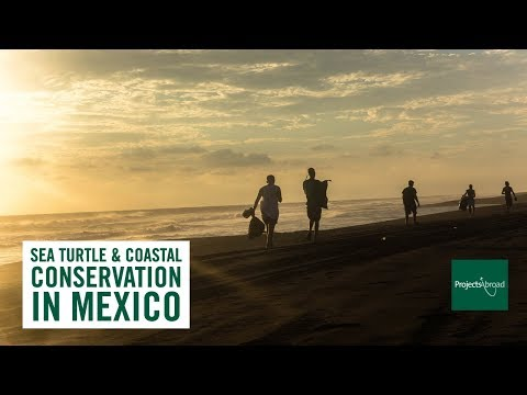 A Day in the Life - Sea Turtle & Coastal Conservation in Mexico with Projects Abroad