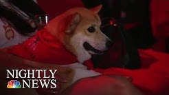 Dogs And Humans Welcome At This Unique Texas Movie Theater | NBC Nightly News