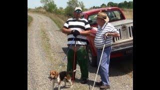 Yankee Lake Ubgf Akc Beagle Field Trial.