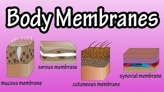 Body Membranes - Types Of Membranes In The Body - Serous Membranes - Mucous Membranes