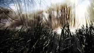 Boys of Blur - Official Trailer