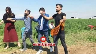 #govend #halay #kürtçehalay tayyan kerevan aşireti düğünleri xezaye düğün