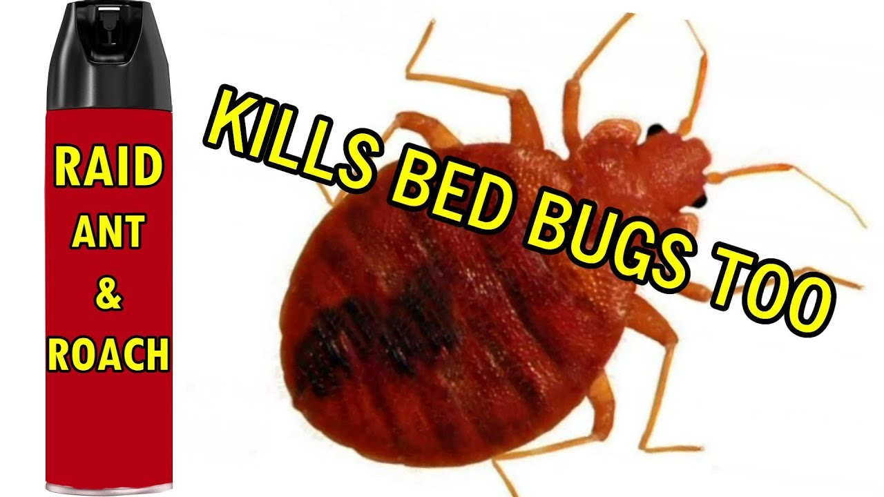 Will Bug Spray Kill Bed Bugs