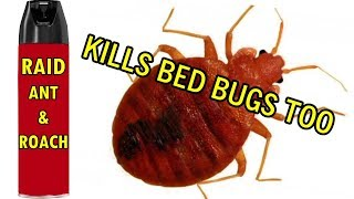 Found out this kills bed bugs instantly - just regular Raid Ant & Roach works