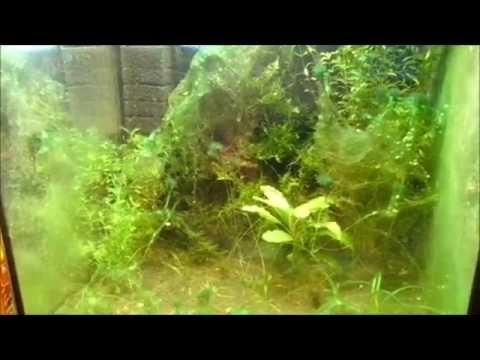 Борьба с сине-зелёными водорослями в аквариуме. Негатив о Dennerle
