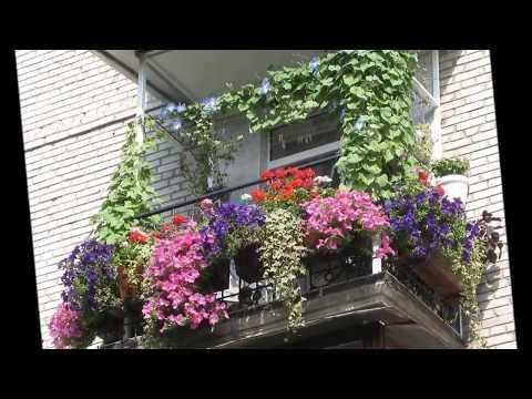 Цветники за окном  Украшаем окна живыми цветами