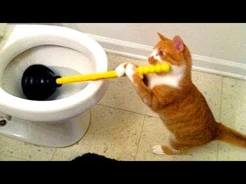 CATS WILL MAKE YOU LAUGH YOUR HEAD OFF – SUPER FUNNY CAT VIDEOS COMPILATION