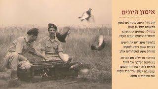 Как голуби помогали воевать израильтянам 70 лет назад
