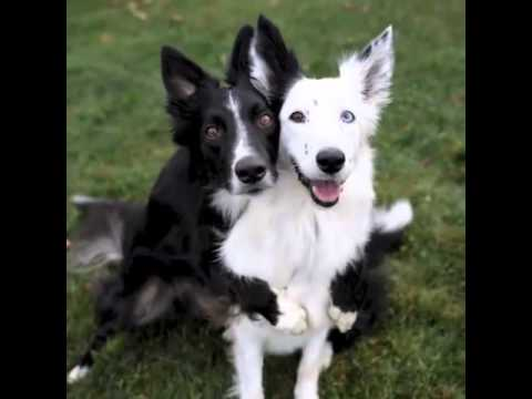 How To Get Your Rescue Dog To Like Other Dogs