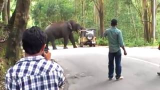 Shocking Video -  Elephant destroy the Vehicle with people