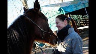 Wie man das Vertrauen eines Pferdes gewinnt (Beispiel: Araber)