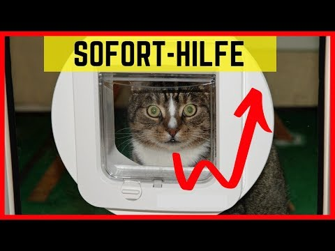 Katze nutzt Katzenklappe nicht - Geniale Tipps für die Katzentür